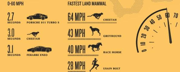 Cheetah - natures speed machine