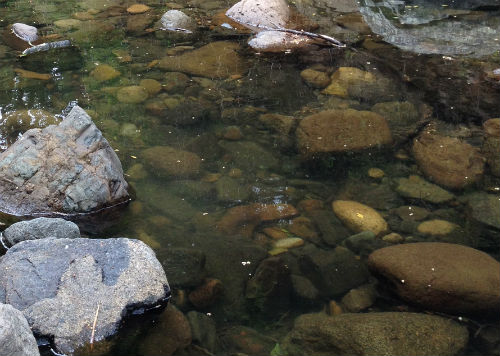 A rocky creek bed with shallow water over the rocks