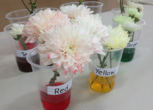 Flowers in food colouring
