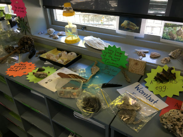 Primary science classroom exploratory materials on a desk