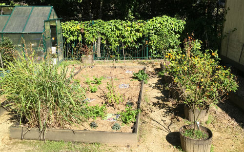 School garden patch with greenhouse