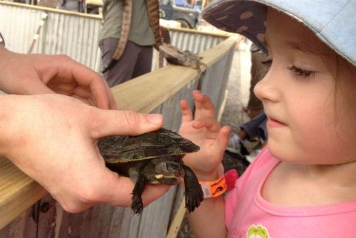 Turtle and preschooler