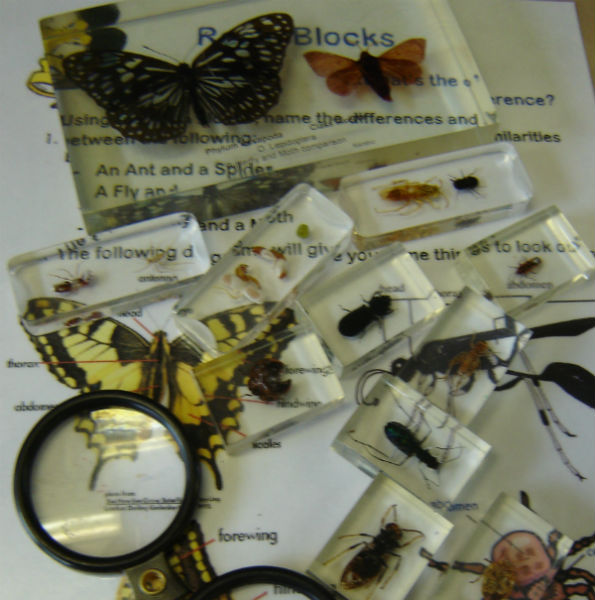 insects in resin blocks