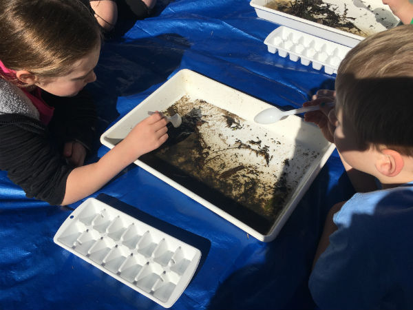 Sorting invertebrates after dipnetting