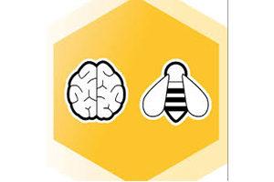 USA Brain Bee